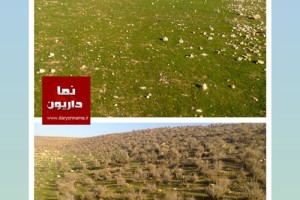 """""""سقلات"""" و """"گوشه گرگی"""" داریون در روزهای پایانی اسفند۹۵+عکس"""
