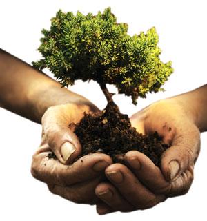 یک خیابان درختی دیگر بوجود آورید !