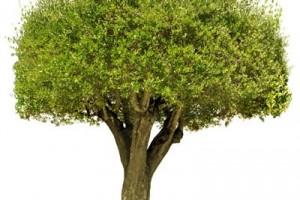 فراموشی روز درخت کاری در داریون؟!