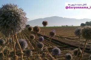 کوه گدوان از نمایی دیگر…+عکس