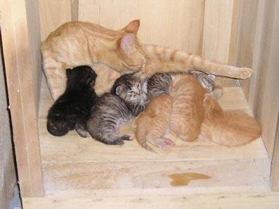 این ماجرا واقعی است/ماجرای آتش نشانی داریون و گربه های خانه ما!