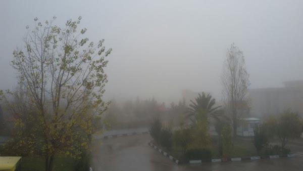 عکس:مه در داریون